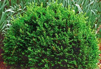 4 Tier Herb Garden